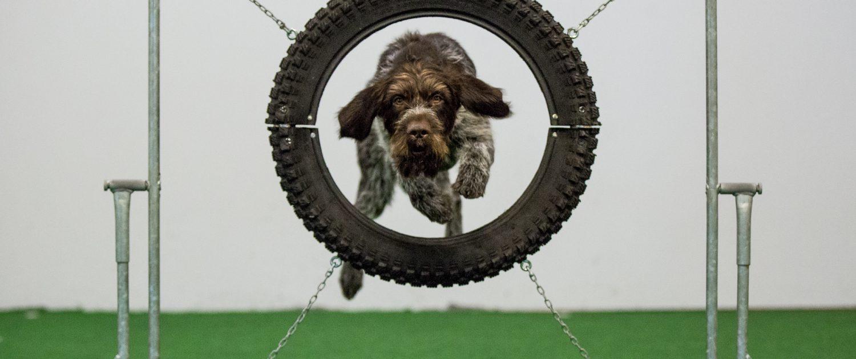 På Plass hunde skole med kurs for alle